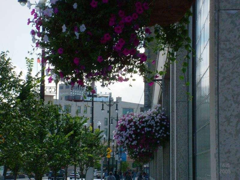 cityhallflowers8sz.jpg